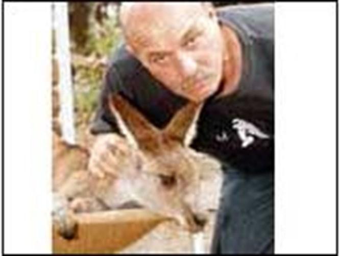 Kanguru, sahibinin hayatını kurtardı